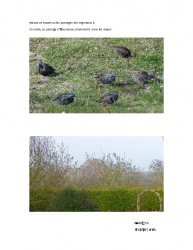 Oiseaux Migrateurs – Fevrier 2017